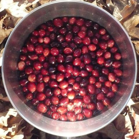 Cranberries in a pot, set on dried leaves