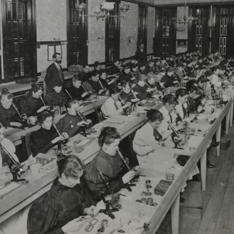 women sit in rows in a room using microscopes