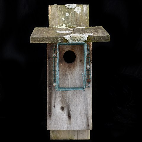 Wooden box with hole in it for birds and wire mesh around opening. There are lichens growing on the top of it. A nail or screw is visible on one side.