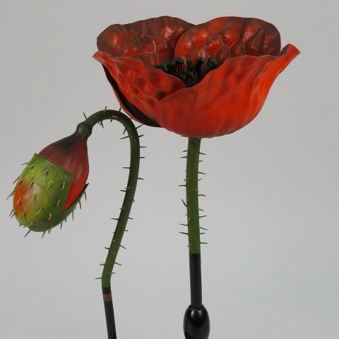 Botanical model of Papaver rhoeas, the common poppy, late 19th century, used at the University of Minnesota Pharmacy School.