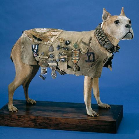 Stubby the dog