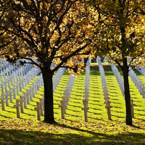 Color photograph of graveyard with white crosses, four trees, sun shining