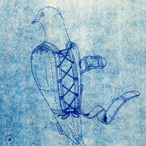 Pigeon in jacket blueprint