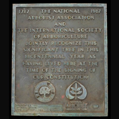 This bronze plaque stood before Oregon's Big Pine from 1989 to 2017
