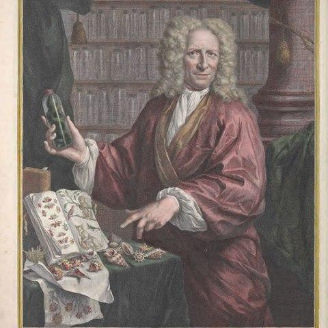Albertus Seba portrait
