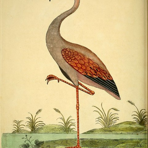 A Natural History of Birds