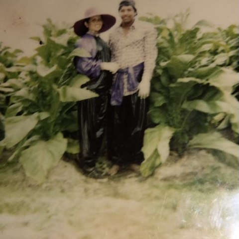 Couple standing with tobacco plants