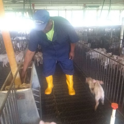 Farmworker with animals